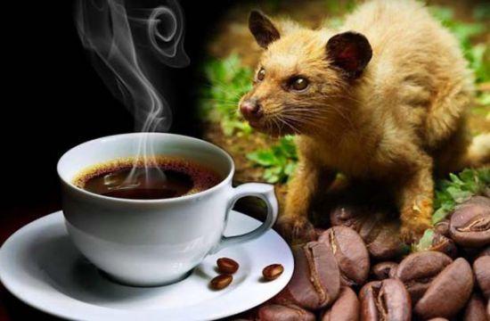 Phân biệt các loại cafe thông dụng dùng để pha uống