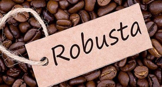 Tìm hiểu về cà phê Vối Robusta tại Việt Nam