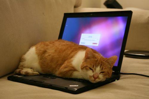 bao ve laptop 1 500x333 jpg