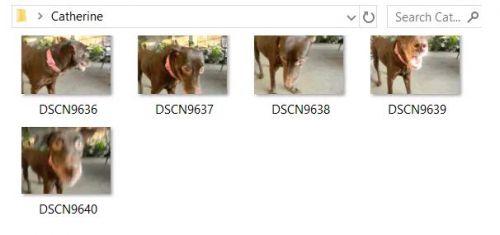 resize photos 500x235 JPG