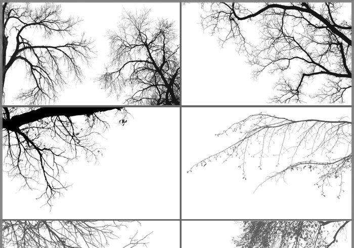 tree borders photoshop brushes jpg